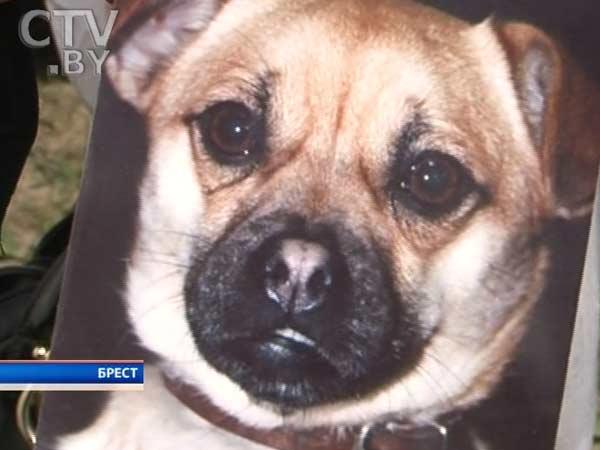 В Бресте на глазах у хозяйки незнакомый мужчина застрелил ее собаку во дворе дома