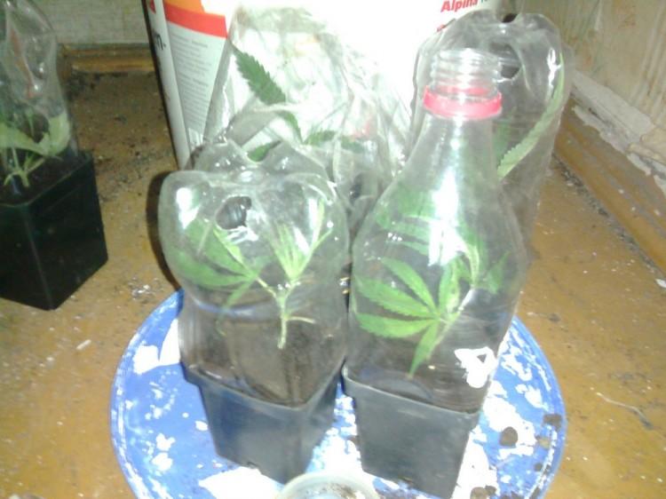 Выращивать коноплю в рб выращивания для себя коноплю ответственность