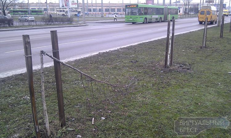 На ул. Суворова вандалы поломали несколько молодых деревьев