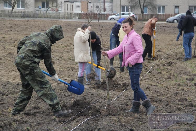 В деревне Тельмы Брестского района началась закладка сквера