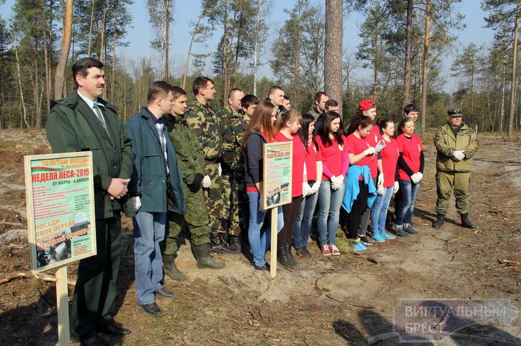Акция «Неделя леса – 2015» стартовала на Брестчине