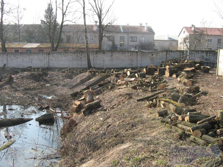 В д. Ковердяки уничтожен парк с акациями. Жители возмущены