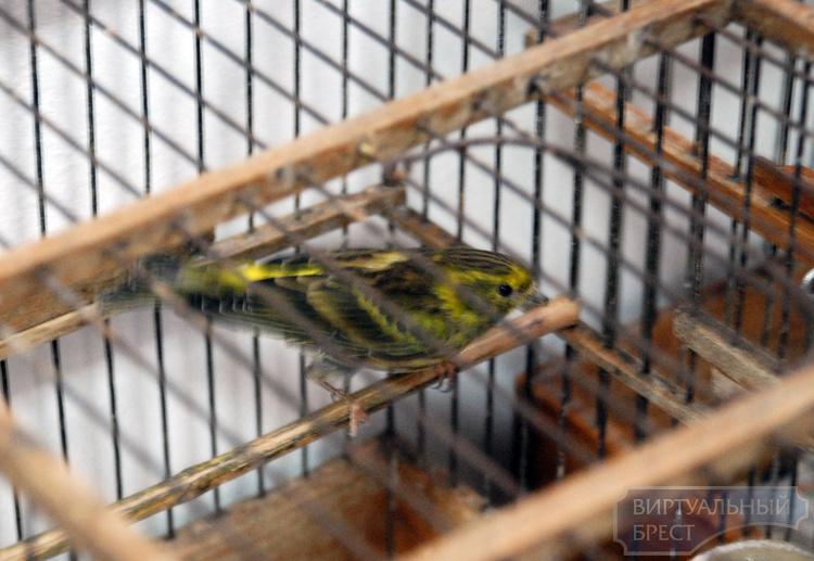 """В рамках """"недели птиц"""" в Бресте открылась выставка фотовыставка «Их стихия - небо»"""
