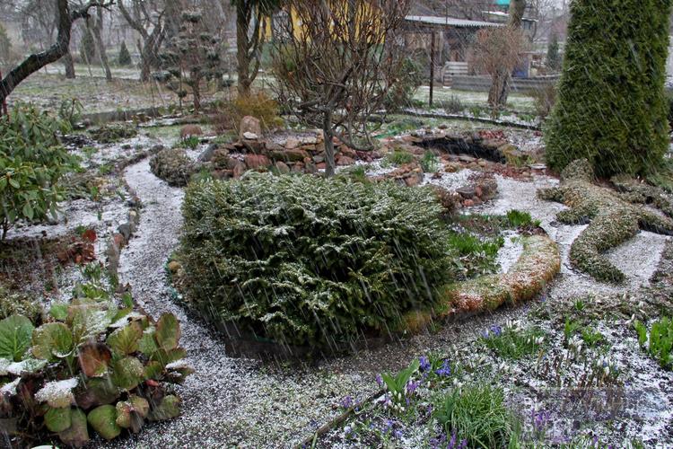 Весна идёт, весне дорогу...! Природа пробуждается от сна