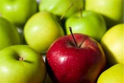 Пресечена попытка ввоза в Беларусь свежих яблок с нарушением