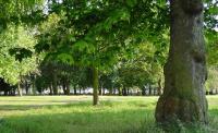 Райисполком отдал под частную застройку зеленую зону в Песках