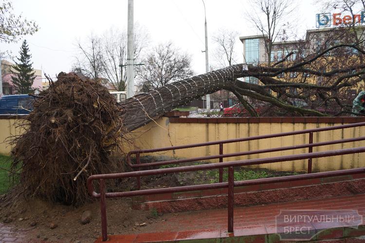 Сильный ветер в Бресте валил деревья и рекламные щиты