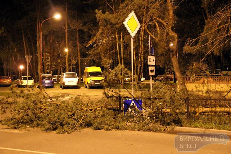О последствиях сильного ветра на территории Брестской области