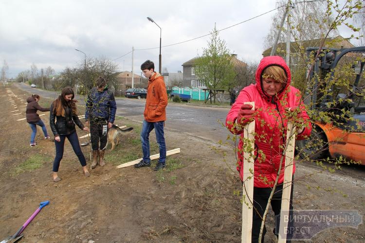 Более 13 млн деревьев высадят в Брестской области в 2016 году