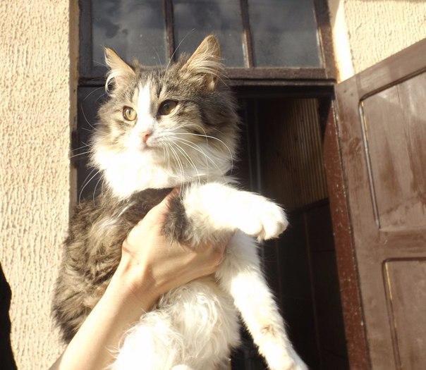 Эти животные ищут свой дом и любящих хозяев