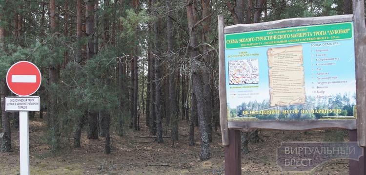 Экологические тропы ждут своих посетителей под Брестом