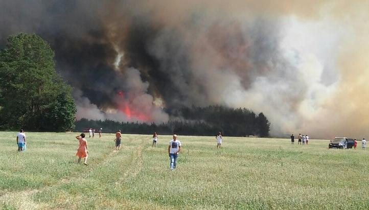 На почти всей территории Брестской области введен запрет на посещение лесов