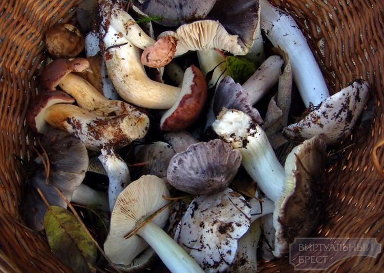 Лучшее средство от осенней депрессии - поездка в лес за грибами