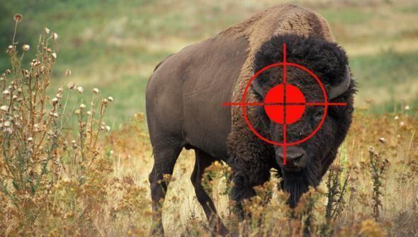 В Беловежской пуще болгарин застрелил зубра вместо кабана