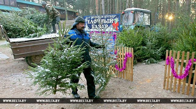 Новогодние ярмарки в Брестской области: где и когда купить ель?