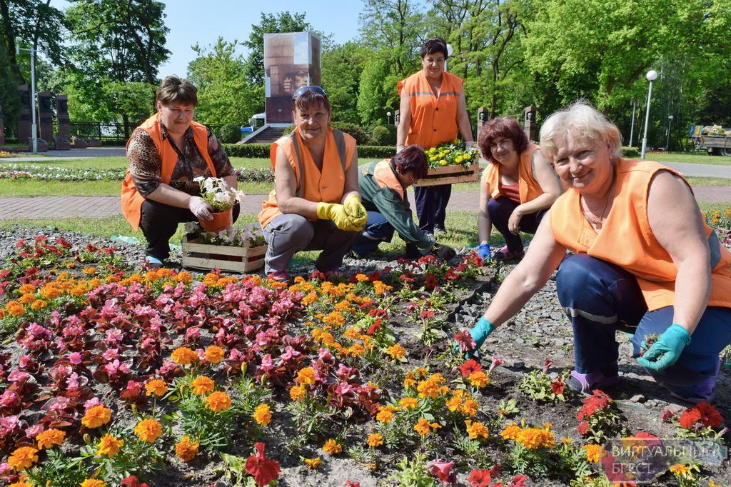 Выращивание цветов на клумбах