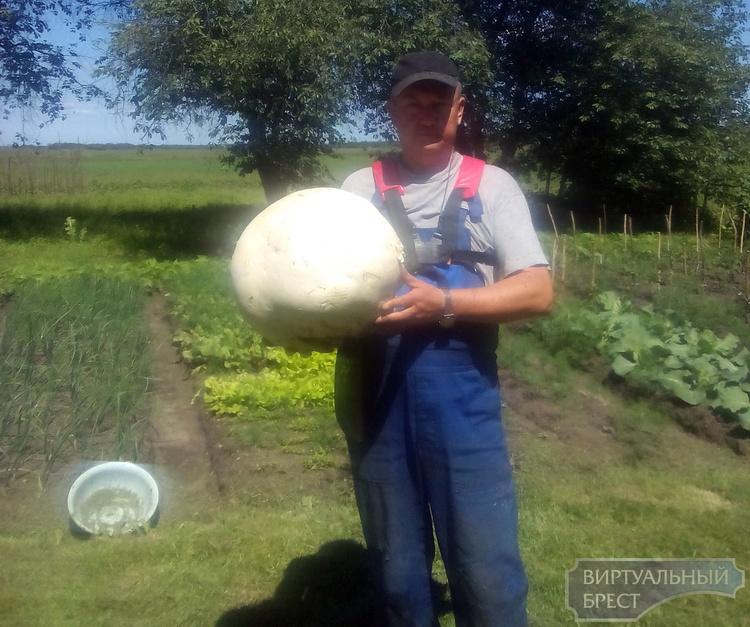 Гриб-дождевик весом в 5 кг. нашли в Каменецком районе