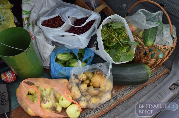 Продовольственная безопасность и свадьба соек на отдельно взятой даче