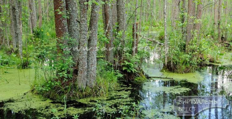 213 тысяч гектаров. На территории Гомельской и Брестской областей появился биосферный резерват