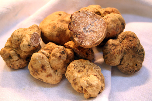 В Беловежской пуще найдены уникальные для Беларуси рыжие трюфели