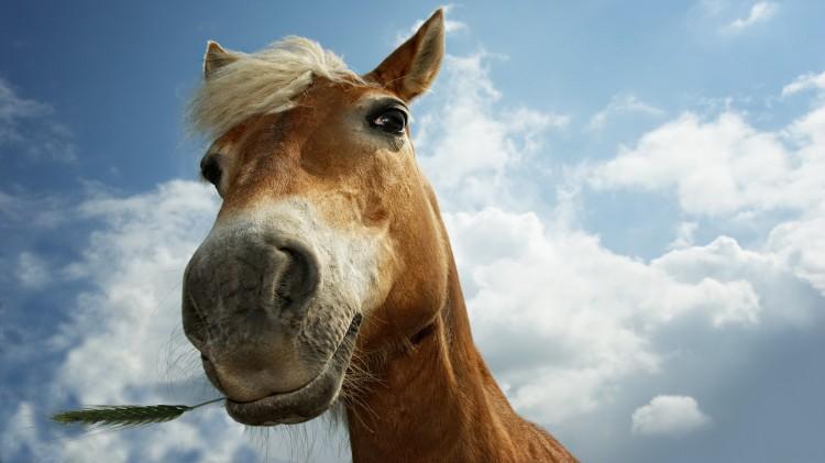 Контрабанда лошадей. Кому выгоден бизнес и как это делают?
