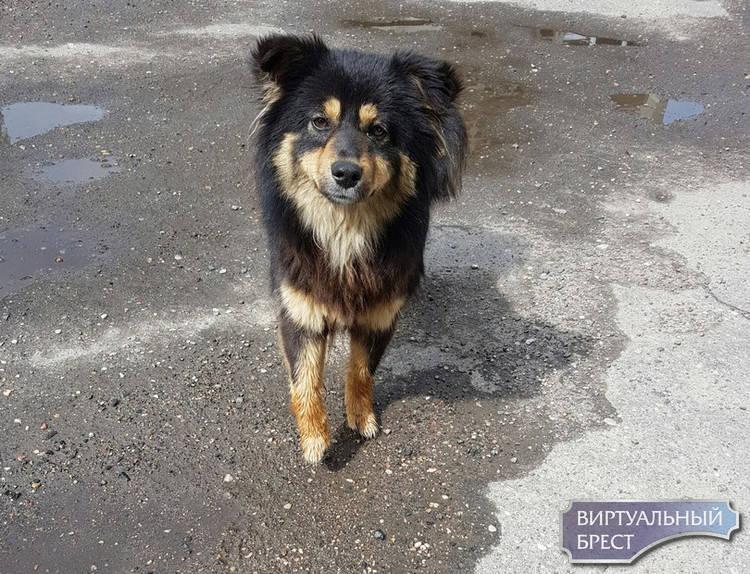В Бресте бездомную собаку сбросили с пятого этажа