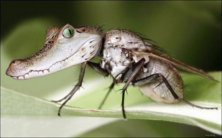 Энтомолог предупреждает брестчан: будьте готовы к нападению мошек!