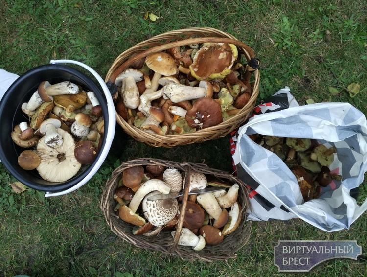 Без грибов никто из леса не уехал. Как мы тихо охотились в пуще