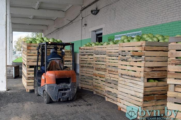 Плодоовощной стабилизационный фонд создают в Бресте