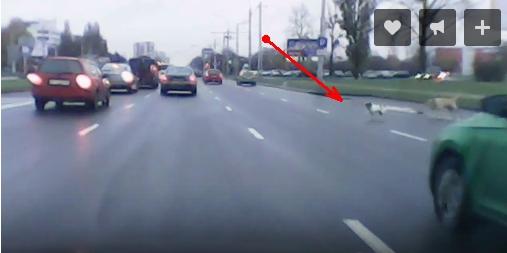 """Собачку жалко, конечно, но лучше не """"дёргаться""""... Бить или не бить животных на дороге?"""