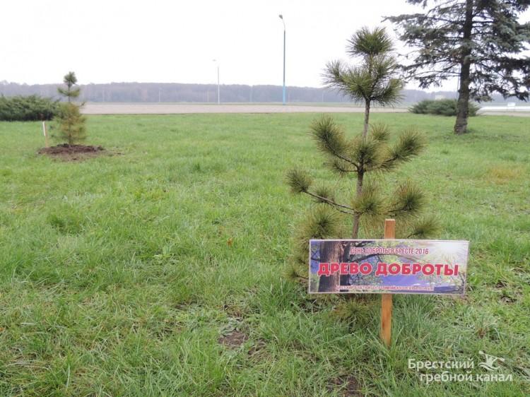 В рамках дня доброты в Бресте высажено «древо милосердия»