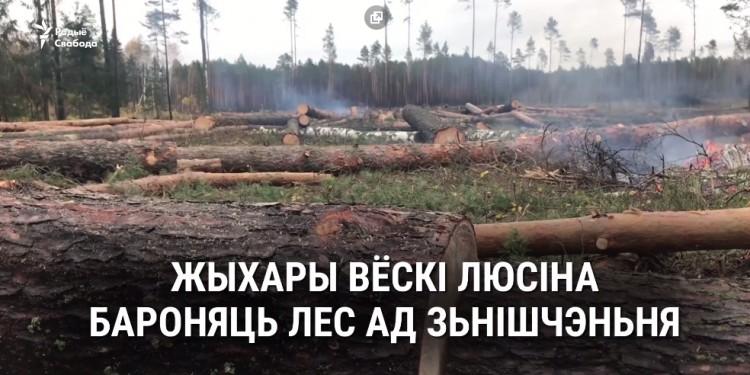 Барацьба з караедам ці незаконныя высечкі? Вяскоўцы змагаюцца супраць вынішчэньня лесу