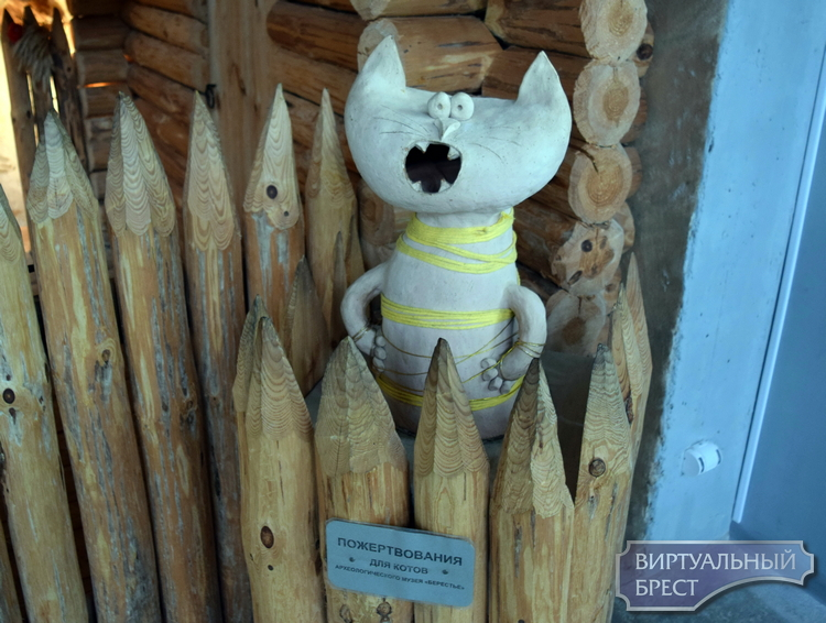 В музее «Берестье» появилась копилка для сбора пожертвований на пропитание котиков