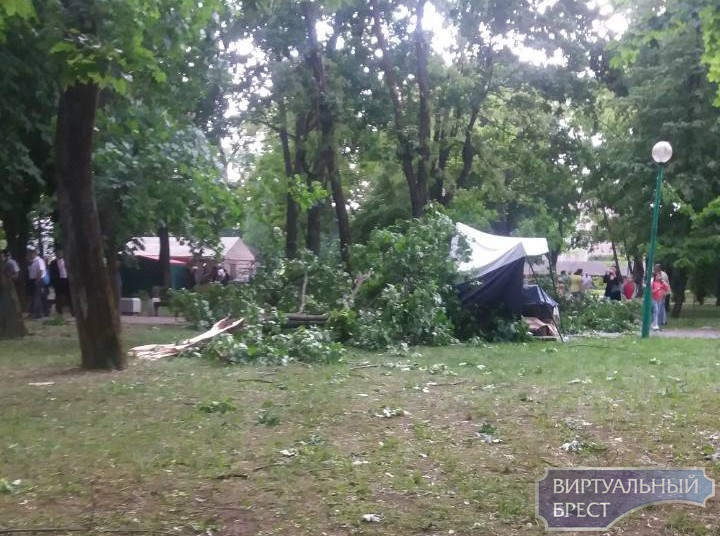 10-летняя девочка, на которую в парке Бреста упала ветка, до сих пор в тяжелом состоянии