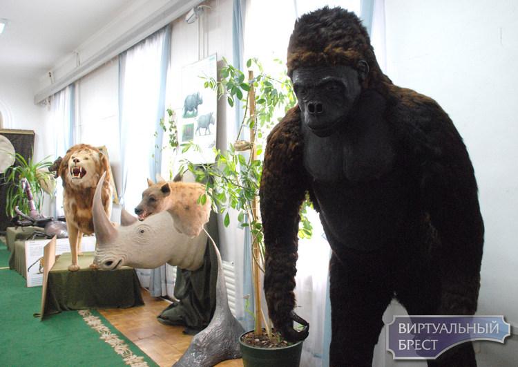 Выставка «В мире животных» работает в Брестском музее с 22 мая