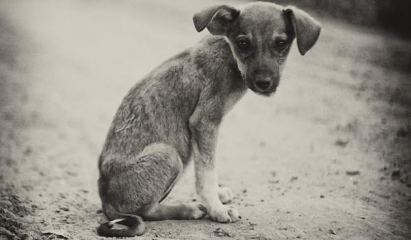 На платформе Talaka идет сбор средств на приют для животных, пострадавших от жестокого обращения и оказавшихся на улице