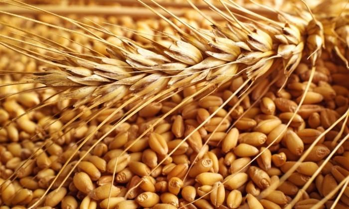 В Каменецком районе кладовщик предприятия украла свыше 3,5 тонны зерна
