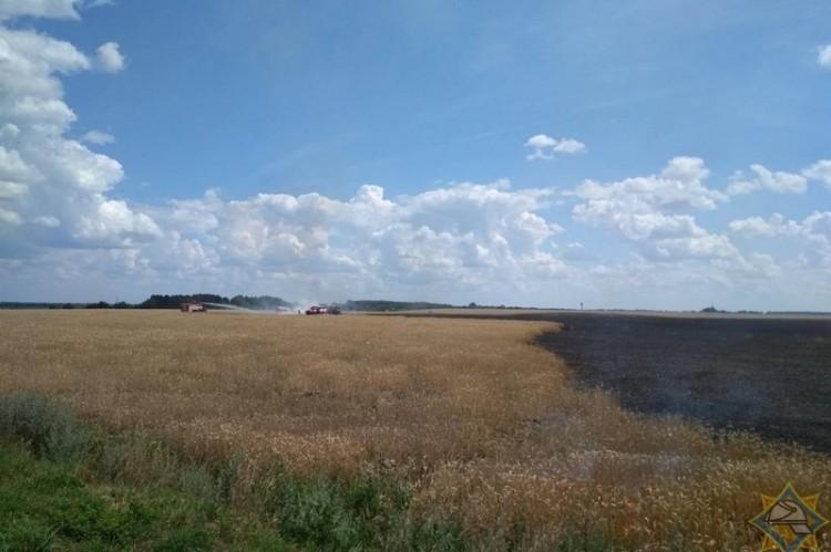 В Пружанском районе спасли от пожара почти 90 гектаров пшеницы
