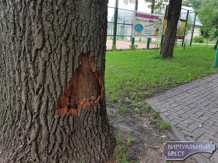 После минского случая и в Бресте обратили внимание на то, что часть деревьев повреждена