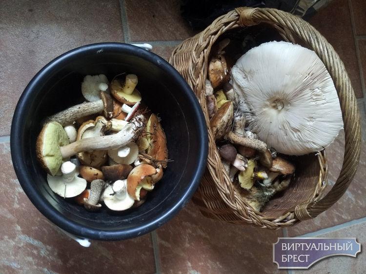 Сентябрь - начало грибного сезона... Как обстановка в лесу?