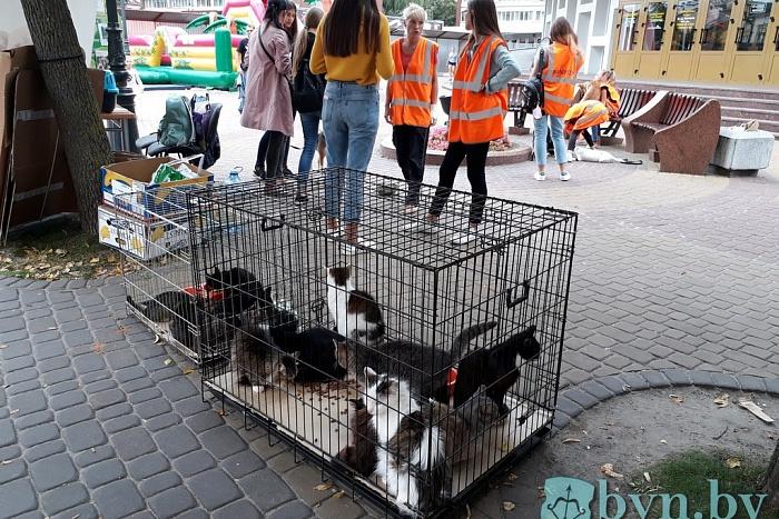 Как волонтёры помогают брестскому приюту для животных найти им хозяев