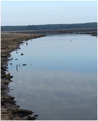 Природоохрана сначала опровергала мор рыбы в Ганцевичском районе, а потом нашла захоронение рыбы