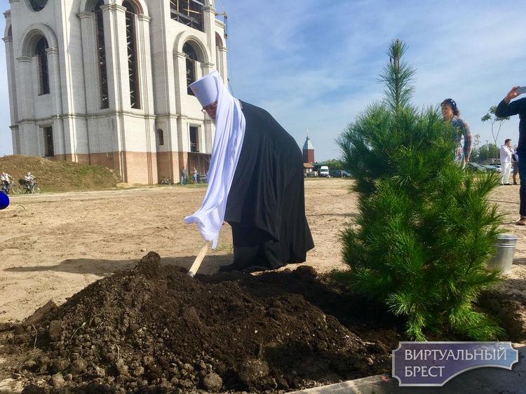 Памятную аллею в честь святого Афанасия высадили в парке 1000-летия Бреста