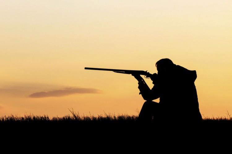 В Ивацевичском районе лось попал в петлю браконьера: возбуждено уголовное дело