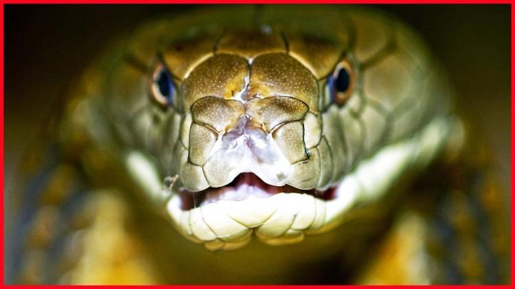 На ул. Луцкой в Бресте метровая змея в шкафу напугала мужчину