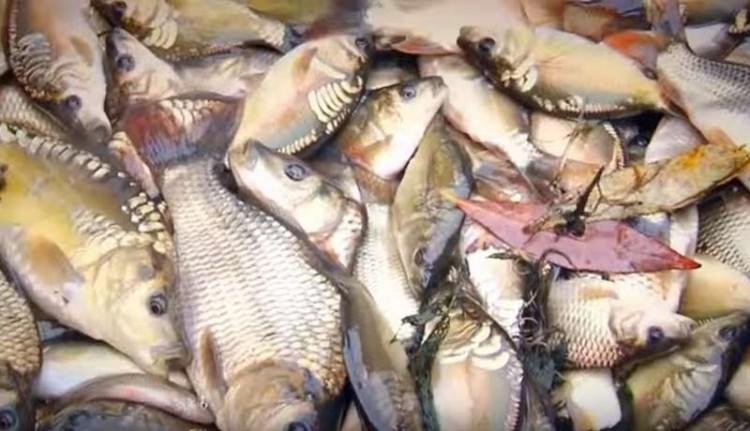 Компания приятелей пыталась похитить рыбу из пруда в Брестском районе