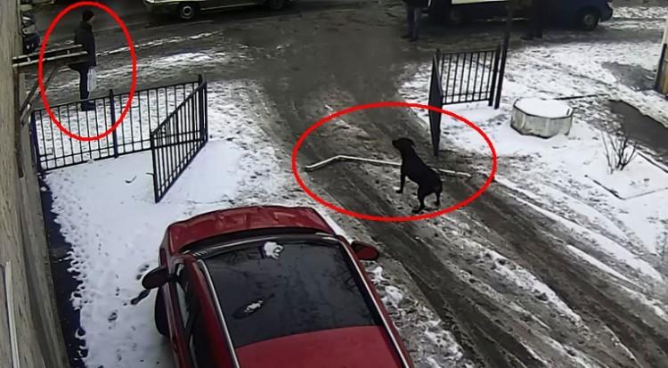 Собака сорвалась с привязи, вырвала навесной замок с ворот и... Смотрите сами