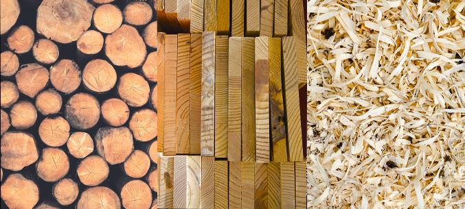 Польша заинтересована в импорте лесных материалов из Беларуси