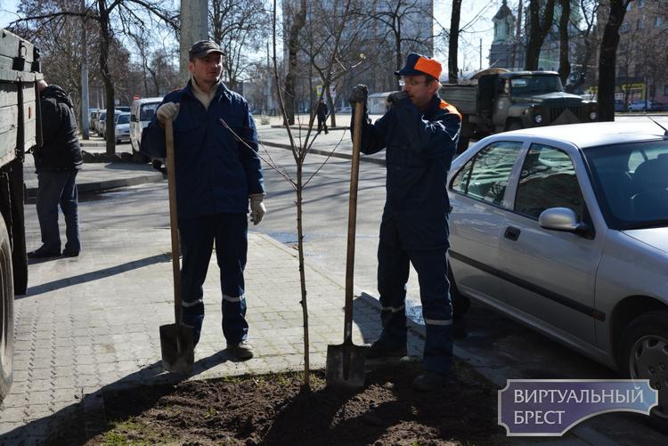 В городе начали массово высаживать деревья на улицах. Что происходит?