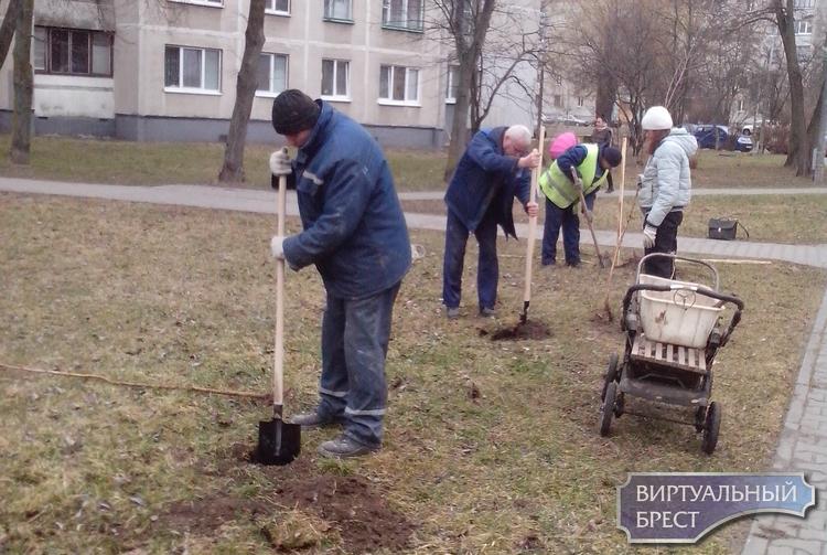 Жильцы этих домов уже высадили деревья у себя на территории. А вы уже тоже в деле?